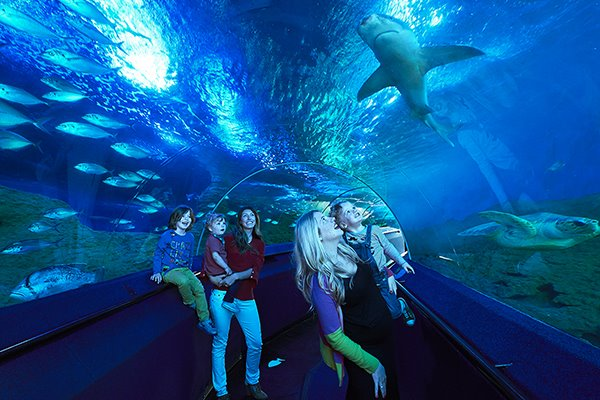 AQWA, AQWA prices, Aquarium of Western Australia, Perth Aquarium, Aqua Hillarys